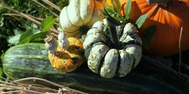 Happy Harvesting – Join Us This Weekend